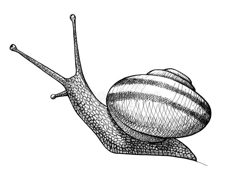 Krypande snigel, dragen tappningillustration för färgpulver hand stock illustrationer