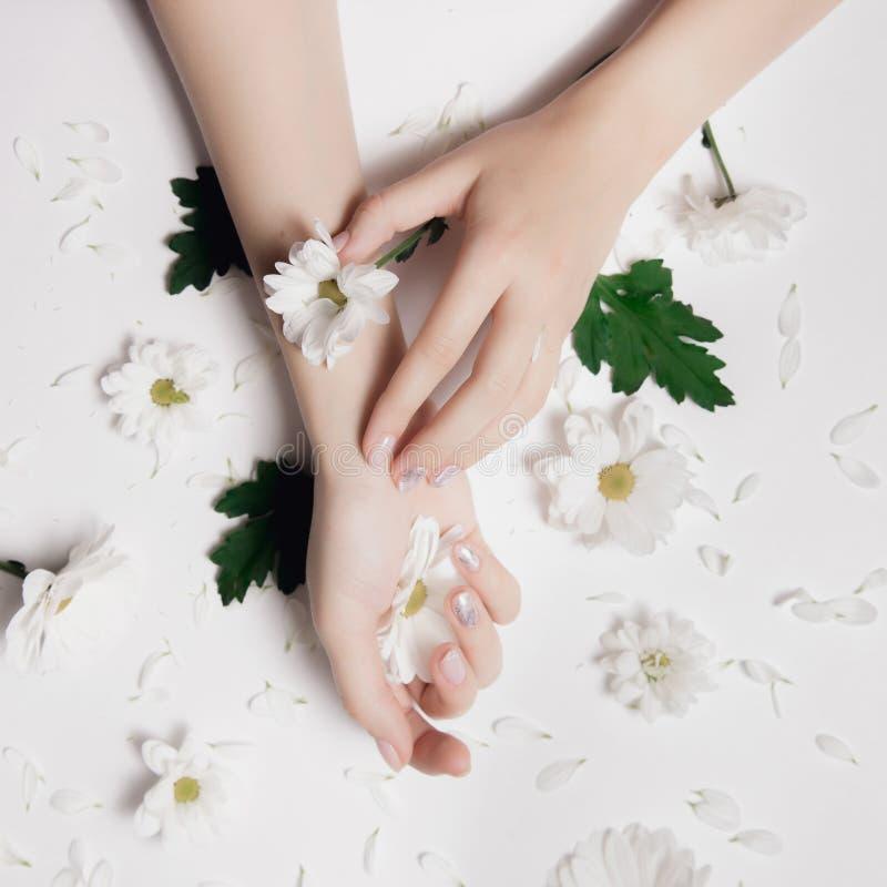 Krysantemum för omsorg för modekonsthud vita kamomilloch med gröna sidor i händer av kvinnor Idérikt skönhetfoto som sitter på arkivbild