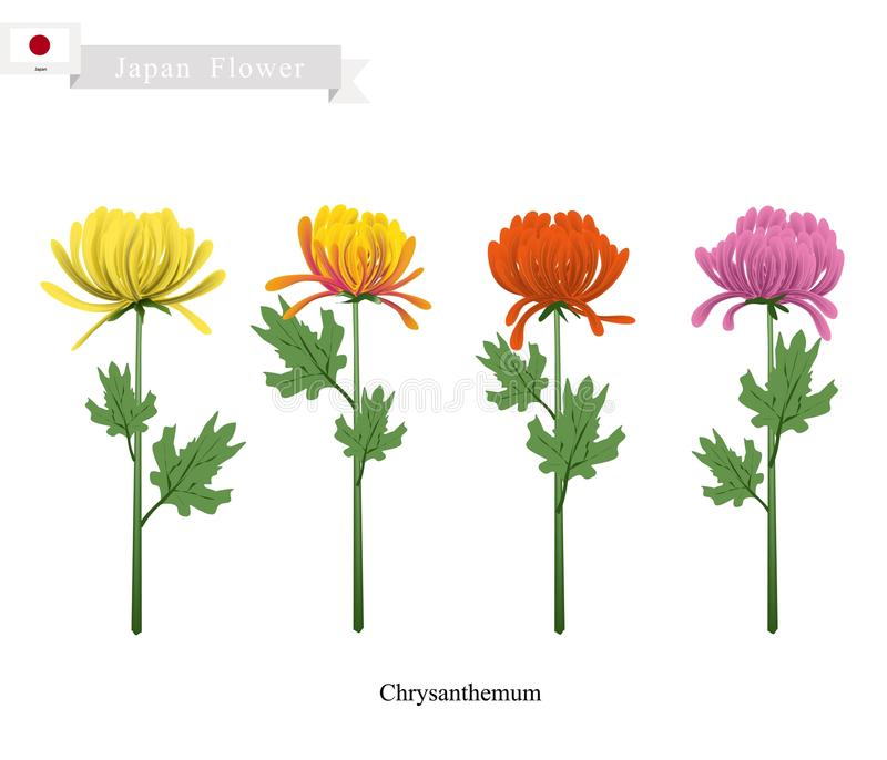 Krysantemumblommor, den nationella blomman av Japan royaltyfri illustrationer