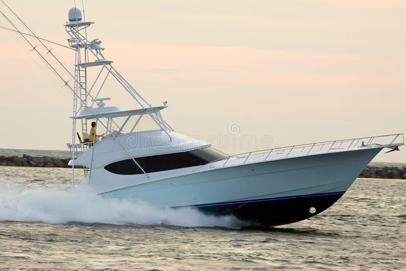 kryssa omkring havsspeedboat royaltyfria foton