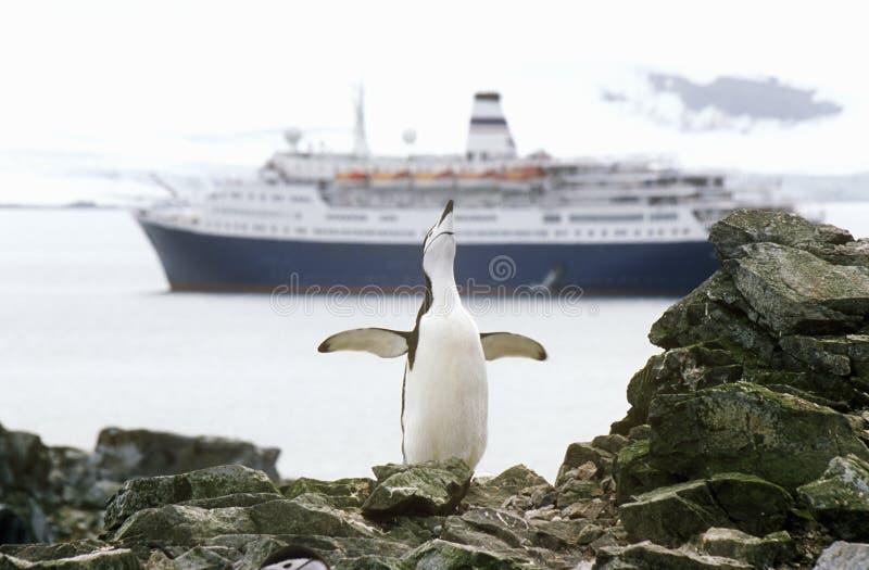 Kryssningskepp Marco Polo och Chinstrap pingvin (PygoscelisAntarktis) på halvmåneön, Bransfield kanal, Antarktis royaltyfria foton