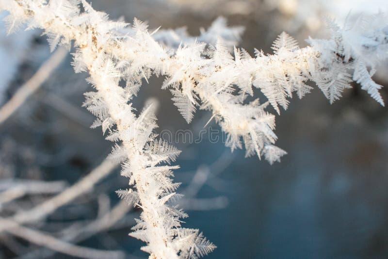 Krystalizujący czarodziejski drzewo hoarfrost na gałąź drzewo ja zdjęcia stock