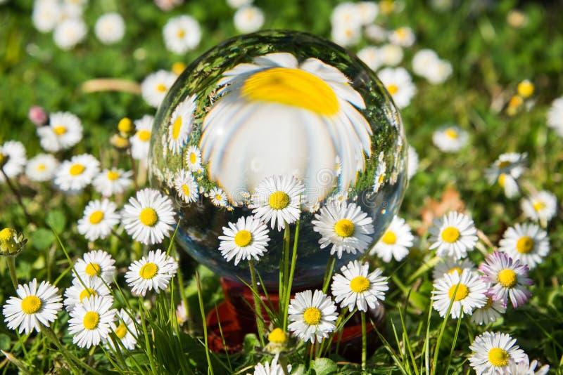Kryształowa kula odbija zieloną łąkę i stokrotki obraz stock