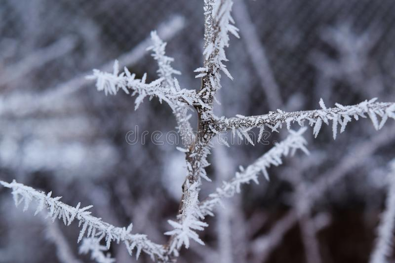 Kryształy lód na gałąź, piękna natura obraz stock