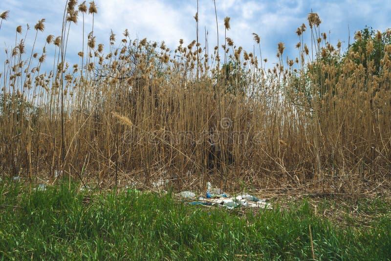 kryzysu ekologiczny ?rodowiskowy fotografii zanieczyszczenie ?mieci w naturze Klingeryt butelki i celofan torby w rzece obraz stock
