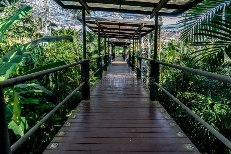 krzak footbridge refleksje river park zdjęcia royalty free