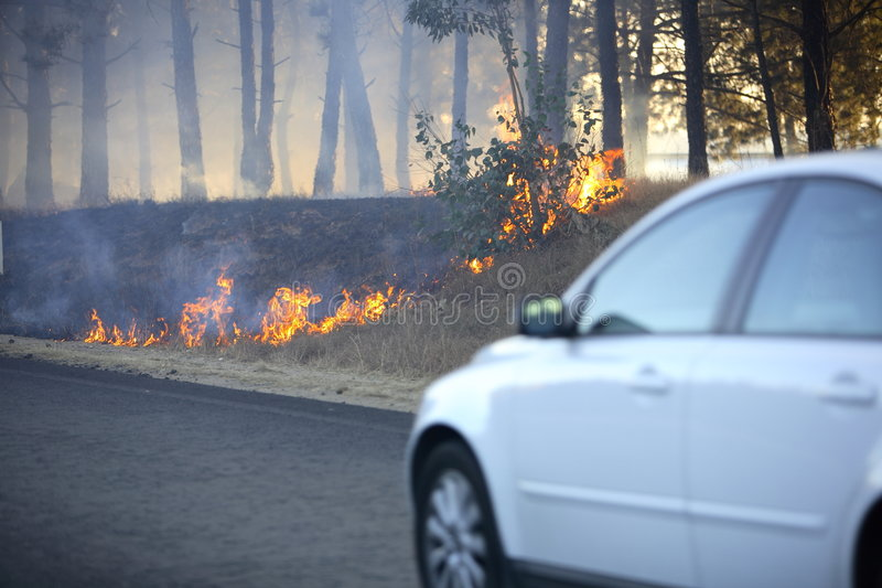 krzak ogień fotografia stock