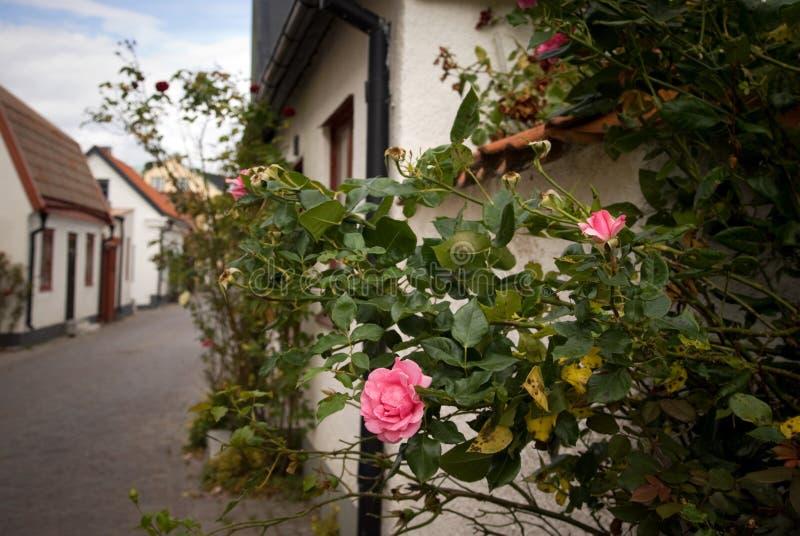 krzak ulica malownicza różana obrazy royalty free