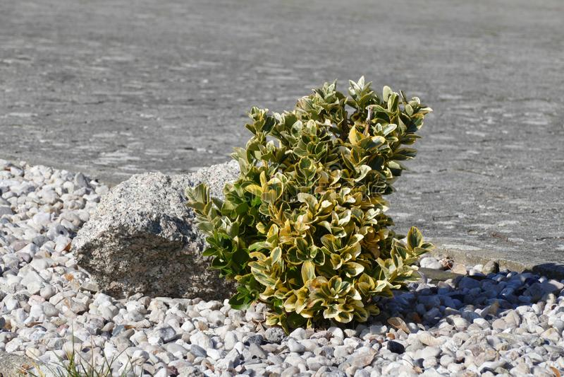 Krzak w małych skałach zdjęcia royalty free