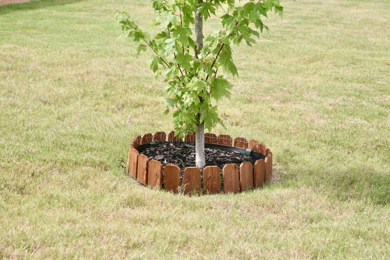Krzaka drzewo z drewna ogrodzeniem fotografia stock