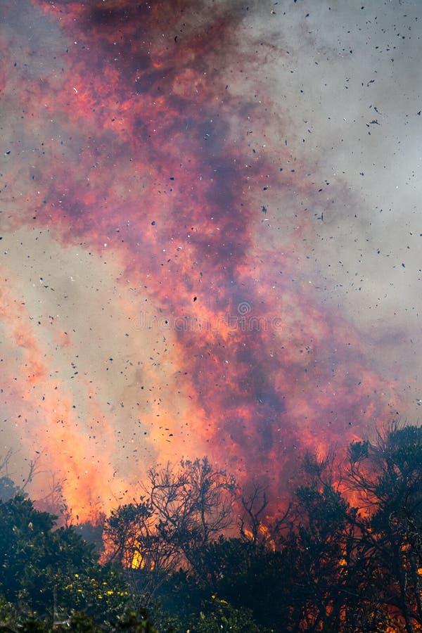 krzaka ogień obrazy royalty free
