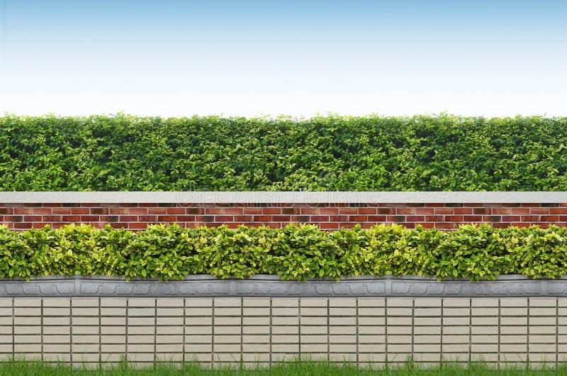 Krzaki i cegły ogrodzenie fotografia royalty free