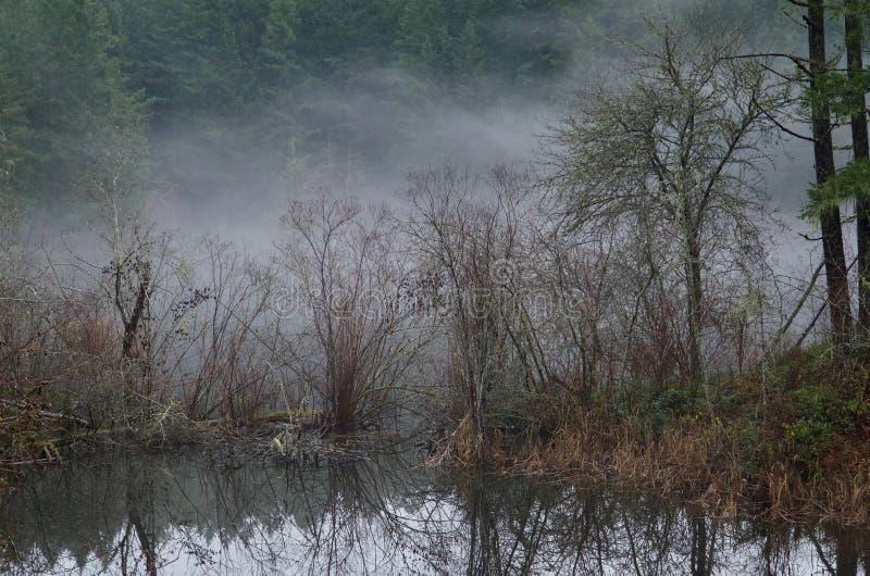 Krzaki i drzewa na zalewającej wyspie stoją za mgle przeciw zdjęcie stock