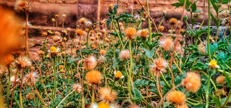 Krzaki z dzikim kwiatem Zbliżający wizerunek lub zbliżenie wziąć na telefonie Zieleń opuszcza i żółty tło daje mię żywemu odczuci zdjęcie stock