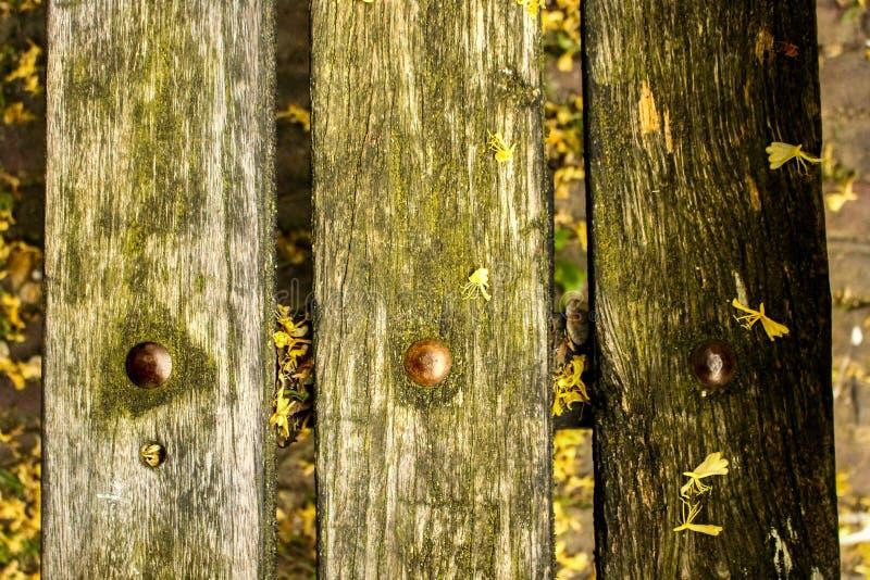 Krzepko w naturze zdjęcie stock