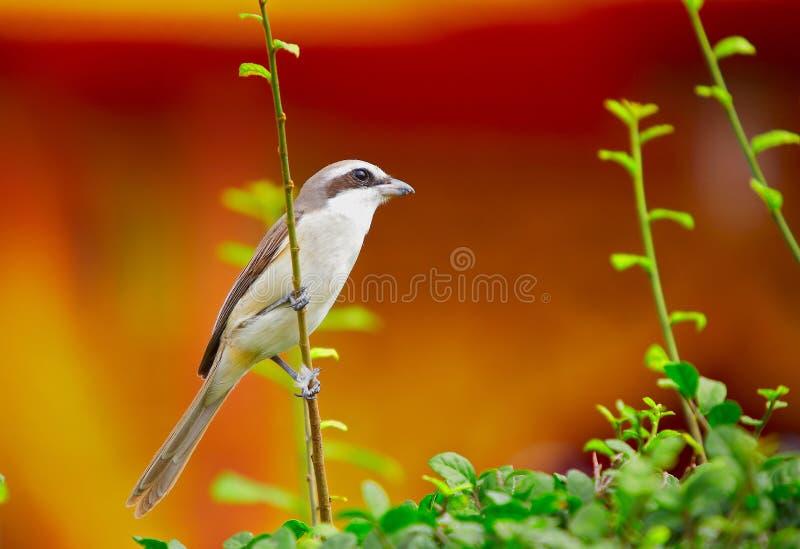 krzew ptaka obrazy stock