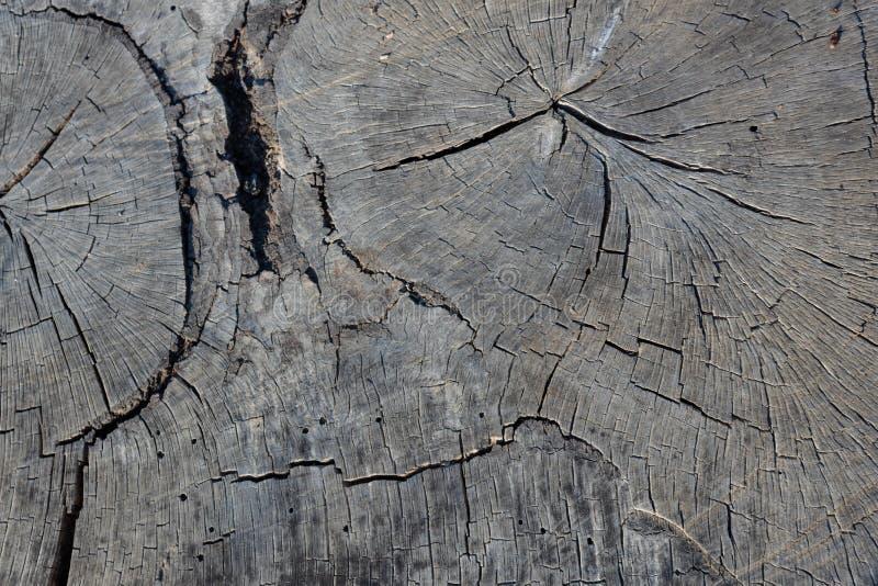 Krzyża cięcie wielokrotność łączył drewniane bele, srebny popielaty wietrzejący obrazy stock