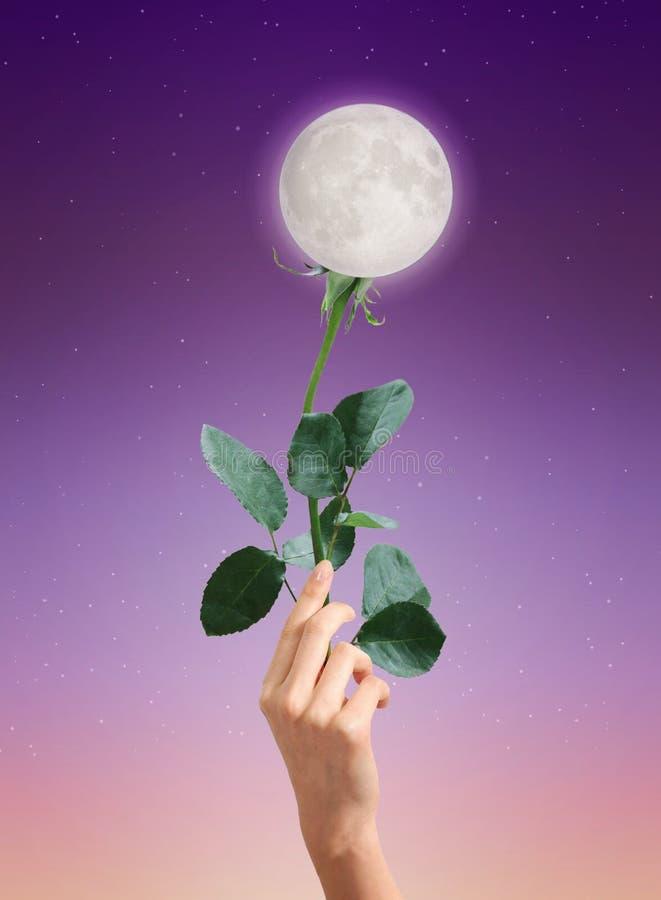 Księżyc róży kwiat, abstrakcjonistyczny miłość symbol obrazy royalty free