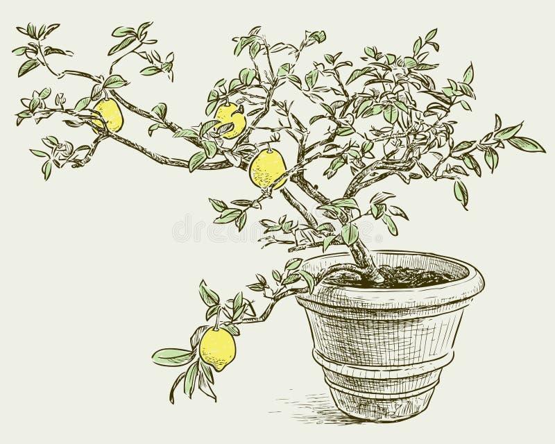 książka botaniczne reprodukcji rocznik drzewa cytrynowe ilustracja wektor