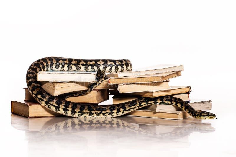 Książki i wąż na białym tle zdjęcie stock