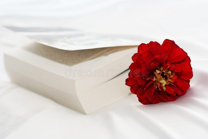 książkowy kwiat fotografia royalty free