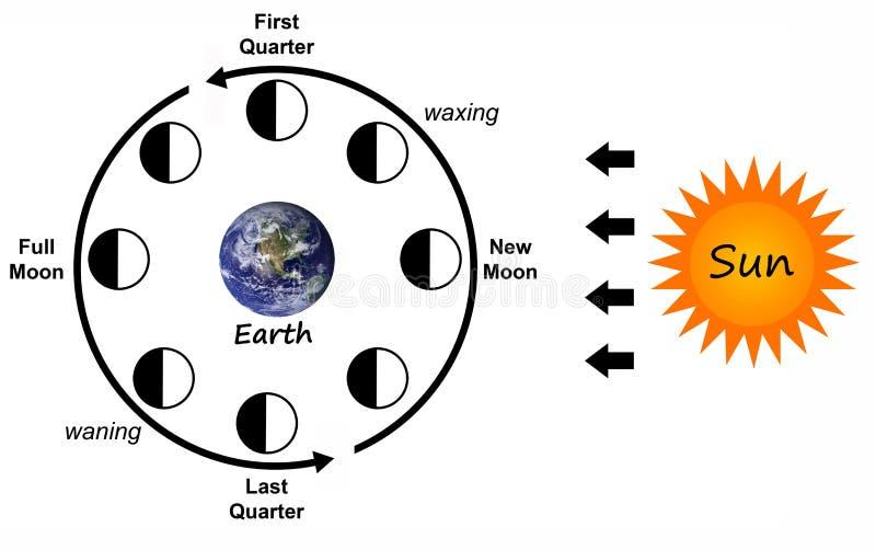 księżyc fazy ilustracja wektor
