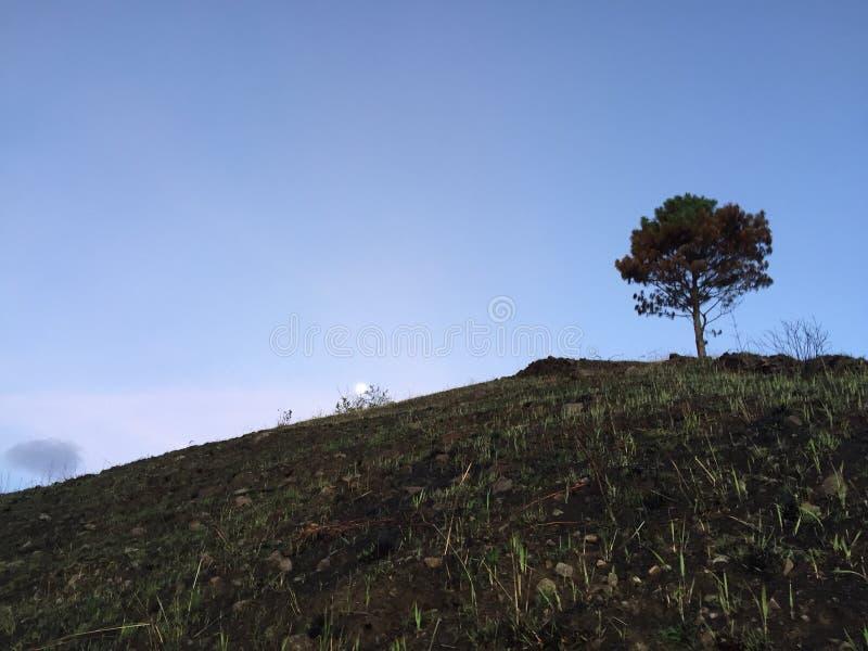 Księżyc i drzewo obrazy royalty free