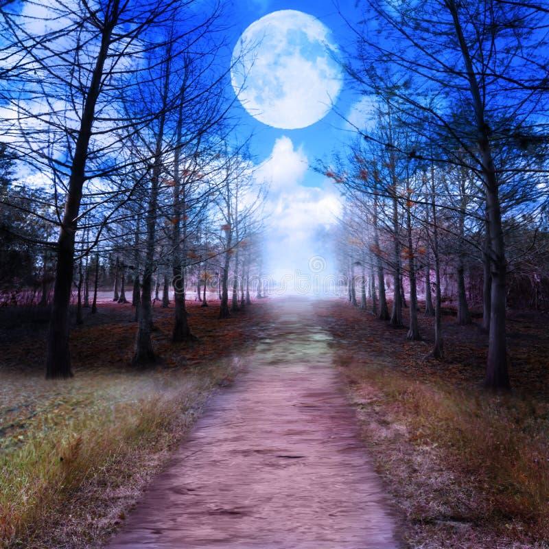 Księżyc W Pełni I drewna ilustracja wektor