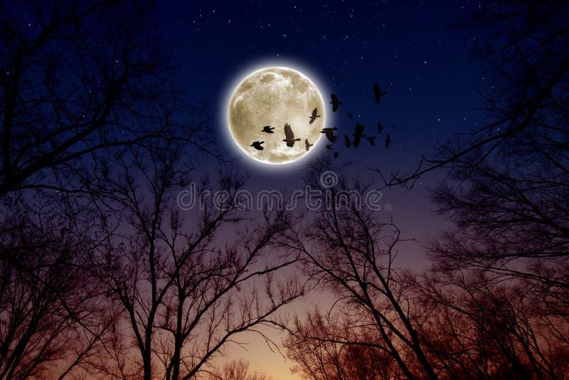 Księżyc w pełni, kruki fotografia stock