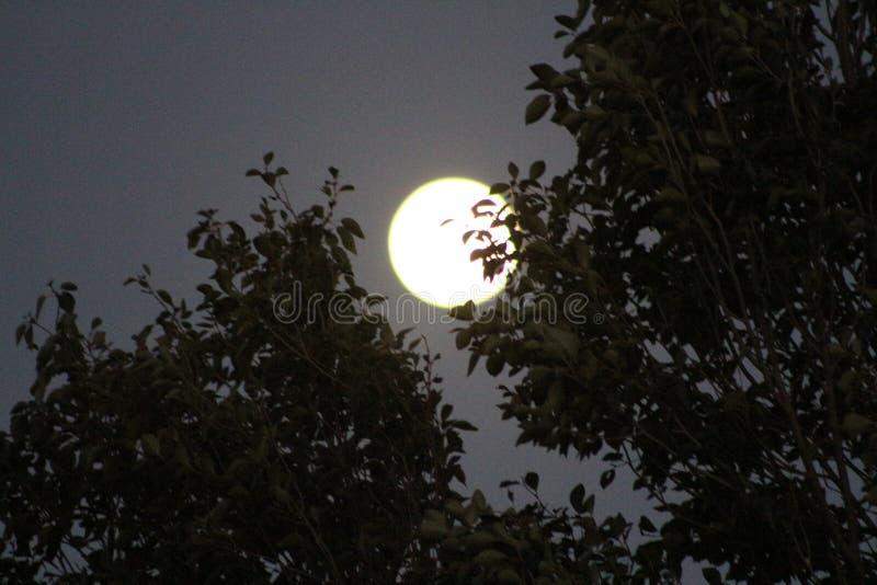 Księżyc W Pełni las fotografia stock