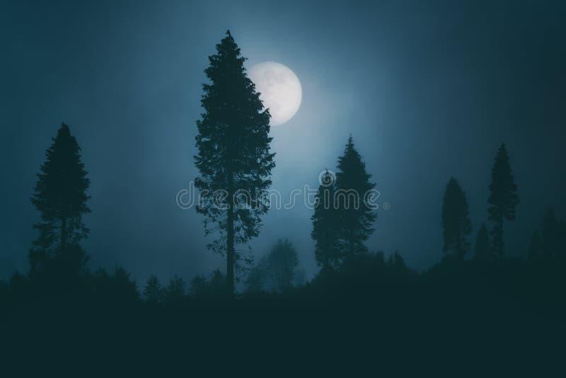 Księżyc w pełni na ciemnym strasznym lesie przy nocą zdjęcia royalty free