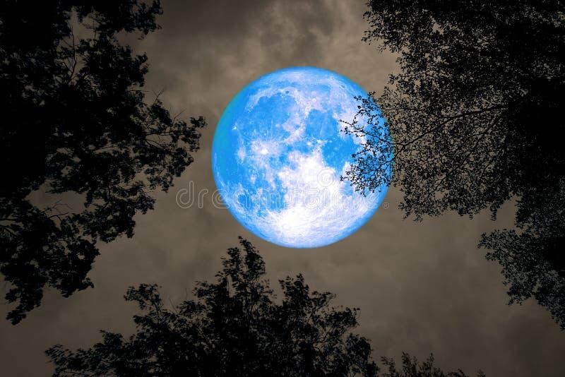 księżyc w pełni tylna sylwetka między wierzchołek gałąź drzewa nocnym niebem obraz royalty free