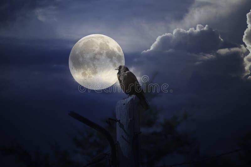 Księżyc w pełni wrona ilustracja wektor