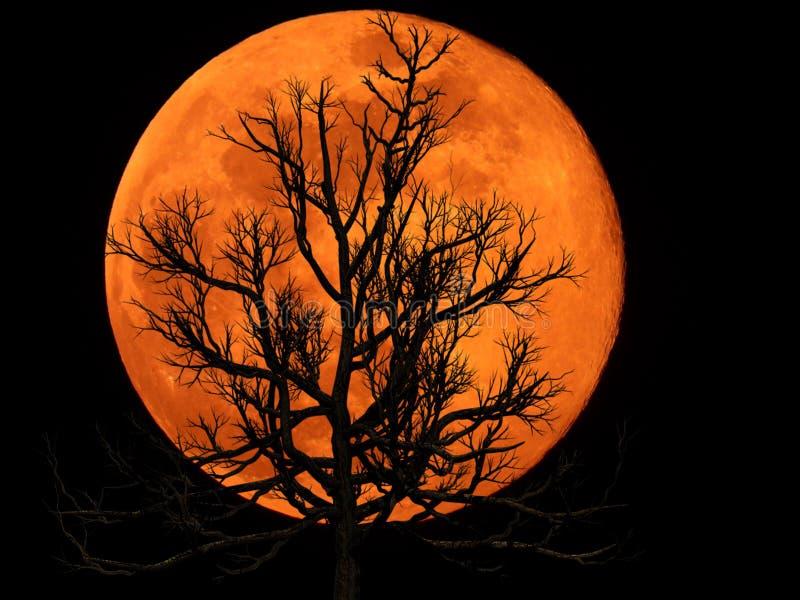 Księżyc W Pełni z Nieżywą rośliną obrazy royalty free