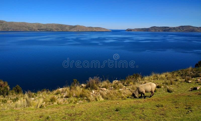 Księżyc wyspa, Jeziorny Titicaca Boliwia obraz stock