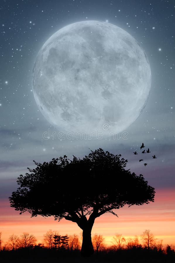 księżyc zmierzch zdjęcie stock