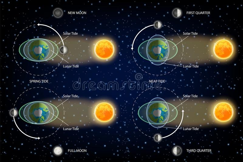 Księżycowa i Słoneczna przypływu diagrama wektoru ilustracja ilustracji