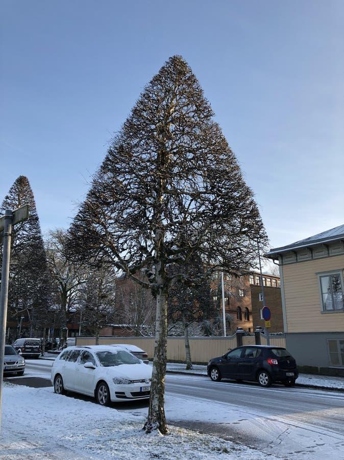 Kształt drzewo fotografia royalty free