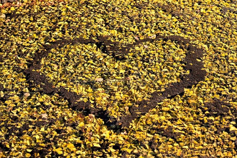 Kształt robić w Żółtych liściach serce zdjęcia stock