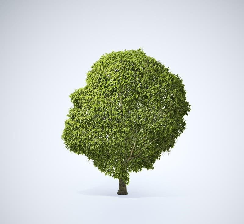 kształtny głowy drzewo royalty ilustracja