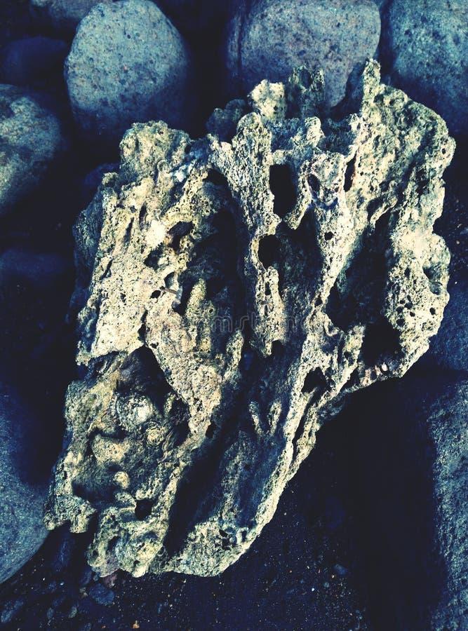 kształtujący koralowy serce zdjęcie royalty free