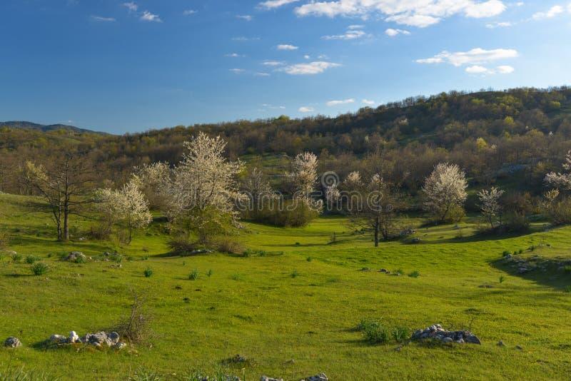 Kształtuje teren z kwiatonośną jabłonią zdjęcia stock