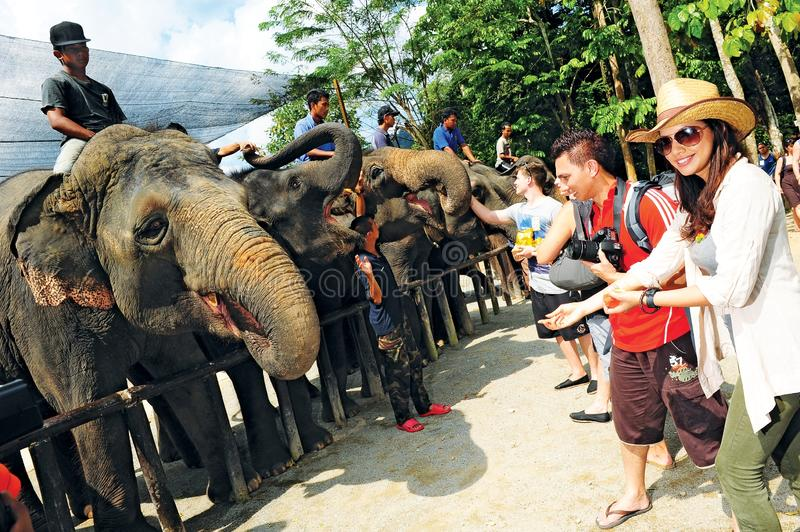 Kuala Gandah Elephant Conservation Centre. The Kuala Gandah Elephant Conservation Centre is an elephant sanctuary located in Temerloh in the state of Pahang stock images