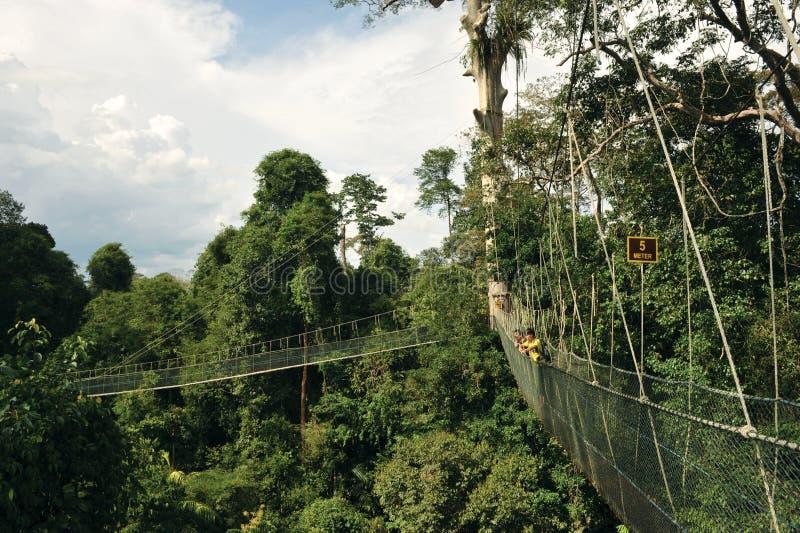 KUALA KOH. The Kuala Koh canopy walk, Taman Negara Kelantan Kuala Koh, Gua Musang, Kelantan, Malaysia royalty free stock images