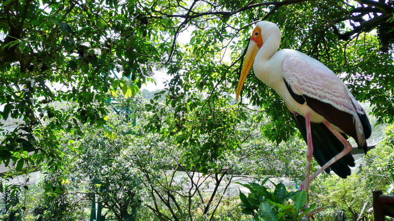 Kuala Lumpur Bird Park, Malaysia. One of the many exotic birds at Kuala Lumpur Bird Park , Malaysia stock image