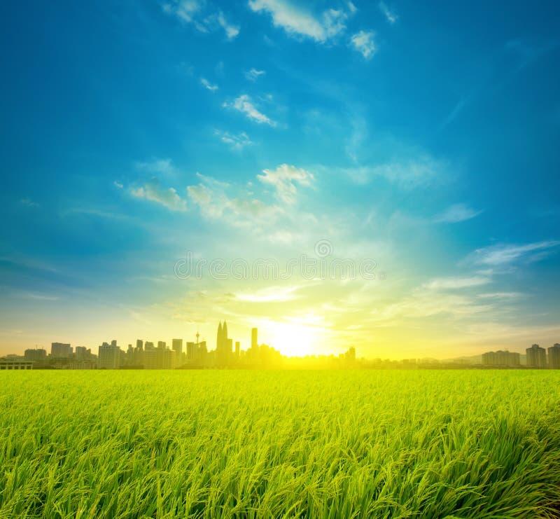 Plantation et ville de gisement de riz image libre de droits