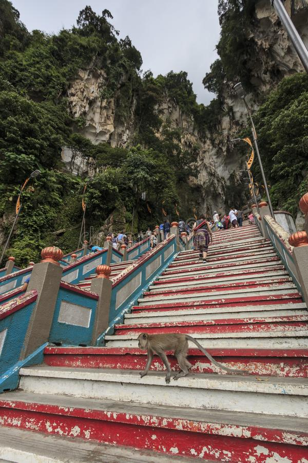 Monkey on the stairs leading up to the Batu Caves entrance in Kuala Lumpur Malaysia. Batu Caves are located just north of Kuala Lu royalty free stock image