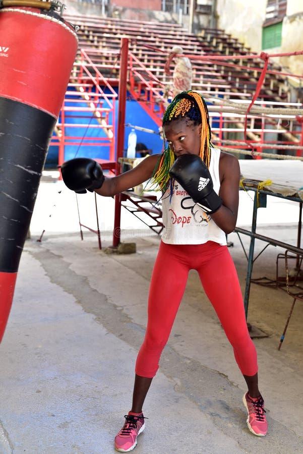 Kubańscy boksery w Hawańskim obraz stock