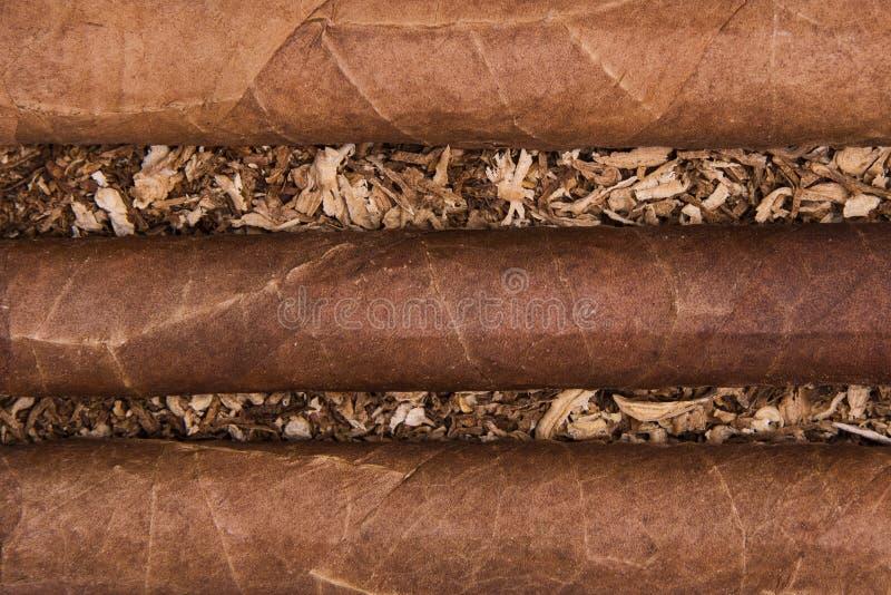 Kubańscy cygara na tytoniu fotografia stock