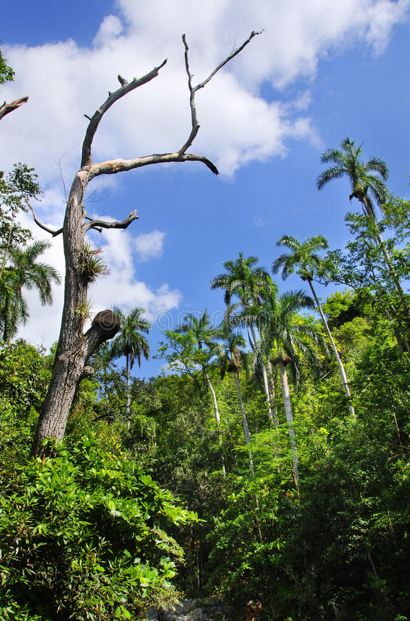 kubański escambray sierra roślinność zdjęcie royalty free